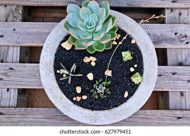 Concrete Garden Planters Images Stock Photos Vectors Shutterstock