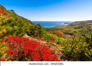 View of Acadia National Park during fall foliage season