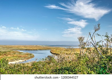 View across bushes and shrubs towards the reeds and grasses growing near the Northsea beach at Kwade Hoek nature reserve on the island of Goeree, The Netherlands