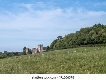 View across farmland to Wells Cathedral.