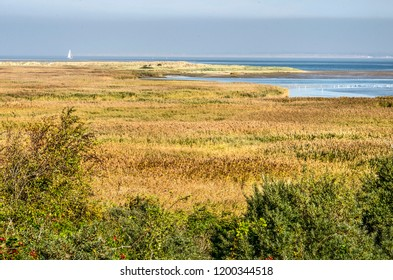 View across a landscape with bushes, reeds and grass towards the beach and the Northsea at Kwade Hoek nature reserve on the island of Goeree, The Netherlands
