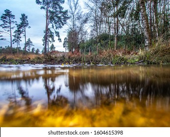 View across water and under water to forest scene in UK with scrub and reflection. Swinley Forest Bracknell Berkshire