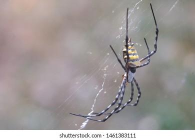 Imagenes Fotos De Stock Y Vectores Sobre Orb Webs Shutterstock