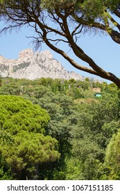 A view of the Ai-Petri mountain from the Vorontsov garden through the branches of trees. Alupka, Crimea