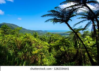 View from Alexandra Lookout, Daintree Rainforest.