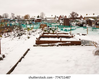 view of allotment covered in snow in winter; essex; england; uk