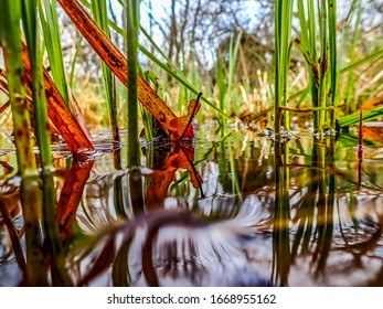 View along water level of red leaf and green reeds