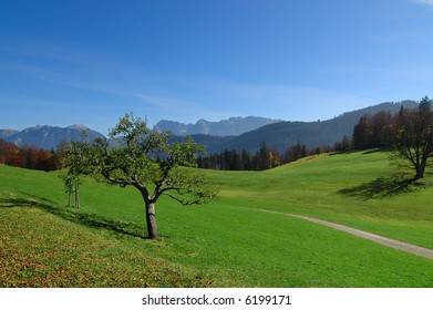 View of the alps in the distance with green field, apple trees, and walking path in the foreground