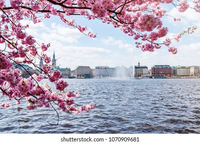 view of Alster Lake in Hamburg framed by blooming cherry tree on beautiful spring day
