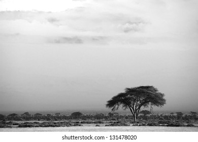 View of Amboseli National Park