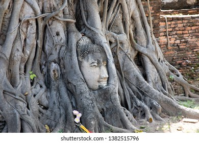 View of the ancient stone Buddha head under tree roots in Ayutthaya