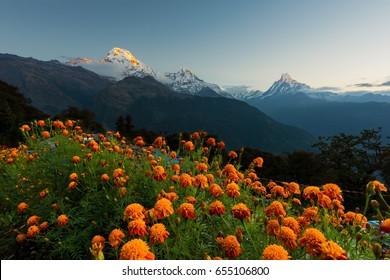 View of Annapurna and Machapuchare peak at Sunrise from Tadapani ,Nepal.