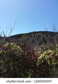 View of the Appalachian Mountains from a lower elevation
