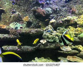 view of an aquarium with different species of reef fish with various colors and surrounded by algae, anemones, rocks and corals