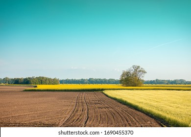 View of the arable field and field with young wheat and blossoming rapeseed on a sunny day. Farmland, rural landscape.