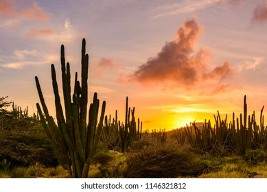 View of the arid nature of Aruba with cactus at sunset