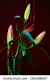 View of arranging  true lilies buds bouque. Macro photography of lively nature.