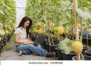 View of Asian woman farmer checking her Cantaloup melon and working on laptop computer in greenhouse farm, modern technology application in agricultural growing activity. (Advertise concept)