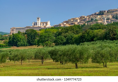 View of Assisi, Umbria Italy. Field of olive trees, cypress trees and Basilica of Saint Francis of Assisi. Roman Catholic Order of Friars Minor Conventual.