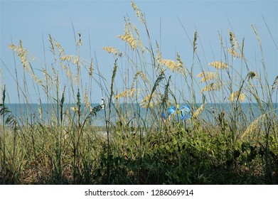 View of the Atlantic Ocean though the sea oats and grass.