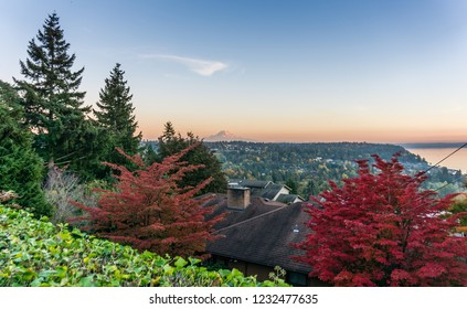 A view of atumn red leaves with Mount Rainier in the distance. Photo taken in Burien, Washington.