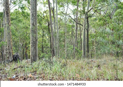 View of the Australian bush with gumtrees, native grasses and fallen leaves. Located in the Newcastle area in New South Wales.