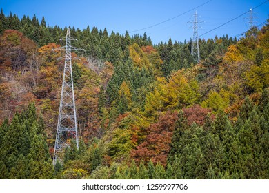 view of autum background with eletronic poles.