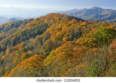 View of autumn foliage in mountains