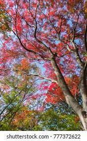 a view of autumn in korankei, toyota japan