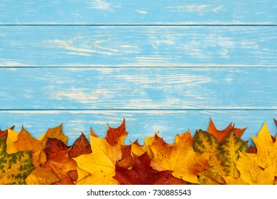 View of autumn maple leaves lying on blue wooden background