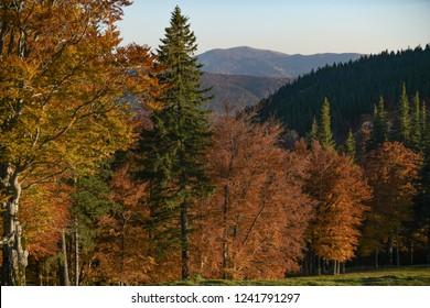 View of an autumn mountain landscape at Cheia, Brasov - Romania