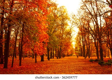 View of autumn park with leaves on ground. Golden beautiful autumn view