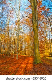 View of an autumnal forest with many leaves on the ground