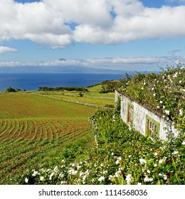 "View from the Azores island Sao Jorge to Pico, in the foreground a house overgrown with flowers, over fields and hills the view goes to the volcanic mountain ""Ponta do Pico"" - Location: Azores"