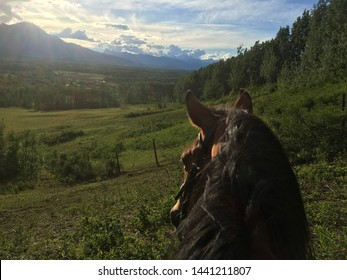 View from the back of a horse on a grassy hillside.