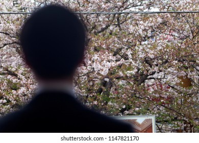 View of back of Japanese office worker (salaryman) dressed in black suit against a background of Japanese cherry blossoms in full bloom in spring in Tokyo, Japan