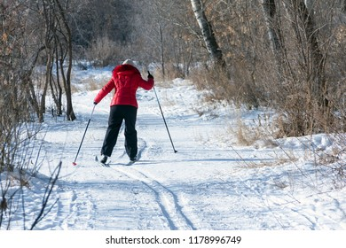 The view from the back of the woman in a red jacket and black pants is skiing. Snowy background with skis between trees and copyspace.