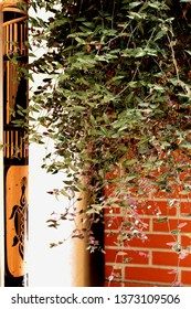 View of backyard decoration composing hanging plant, decorative object of bamboo and brick wall and a white pipe in the background, in the city of São Paulo, Brazil.