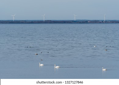 View from the Baltic Sea in Sweden with windmills, waterfowl and calm blue water