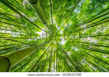 View Bamboo Forest Beautiful Nature Wallpaper Stock Photo Edit Now