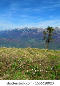 View of the Baska Grapa valley, Slovenia and mountains of the Julian alps, incl. Crna Prst and Rodica and spring wildflowers spring snowflake (Leucojum vernum) growing in front - Shutterstock ID 1556628020