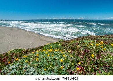 View of the beach from the cliff. Beautiful blue sea. Incredible landscape of the coast. Sonoma Coast State Park, California, USA