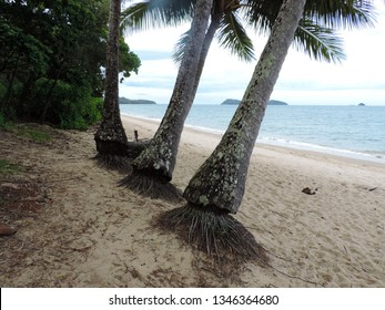 View of the beach, sea and palms at Palm Cove Beach. Cairns, Queensland, Australia