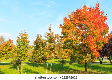 A view of a beautiful autumn forest with colorful yellow and orange leaves