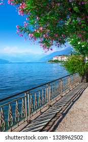 View of beautiful blue Como lake, Lombardy, Italy. Nature scenery with blossoming tree. Como lake landscape.