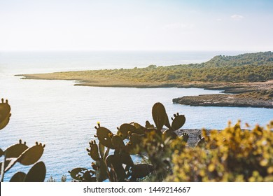 View of the beautiful cliffs. Sea in Salento, Apulia, Italy. Province of Lecce (also know as known Province of Terra d'Otranto). Nature and marine reserves concept. Blurred foreground
