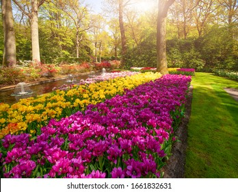 View at beautiful Keukenhof park flower lawns under blue sky during annual exhibition