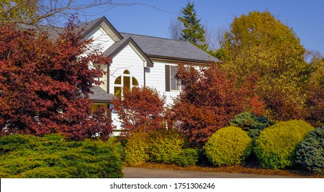 View of beautiful Midwestern landscape in summer with colorful trees and bushes  in front yard