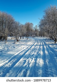 View of beautiful park and road covered with snow on a sunny day with direct sun behind trees. Freezing fairytale inspiration