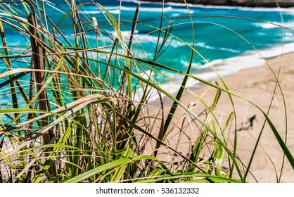 View of an beautiful sand beach with turquoise sea water and grass.